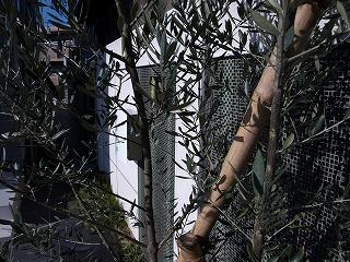 シンボルツリー1-1