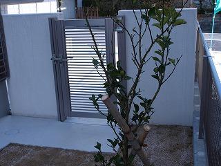 植栽2−2