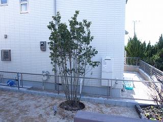 植栽2−3