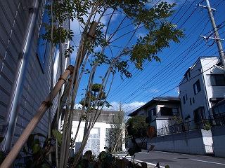 植栽1−1