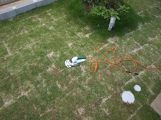 あまり伸びない芝
